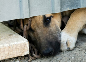 Strengthen Animal Cruelty & Neglect Laws