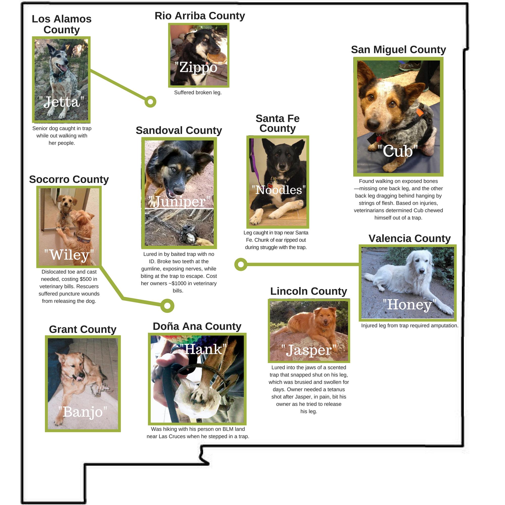 dog trap injuries