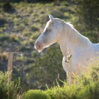 a01_jd_12jun_horses-1-850x567