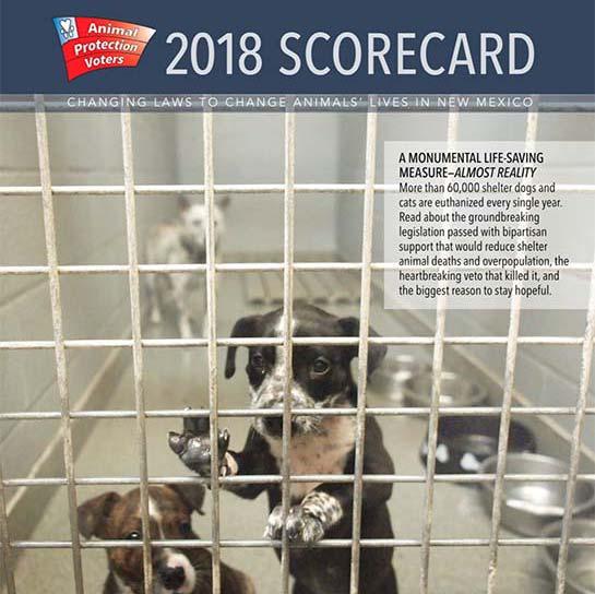 2018 Scorecard